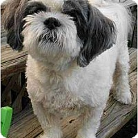 Adopt A Pet :: Abbey - Fort Hunter, NY
