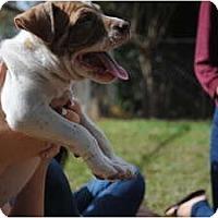 Adopt A Pet :: Tilly - Orlando, FL