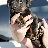 Adopt A Pet :: Link - Cumming, GA