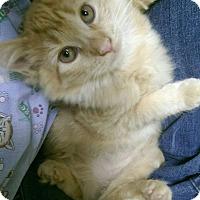 Adopt A Pet :: Lindsay Lohan - Richboro, PA