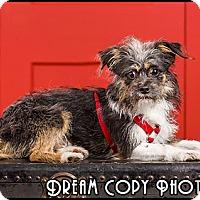 Adopt A Pet :: Spencer - Owensboro, KY