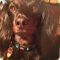 Adopt A Pet :: Max (Courtesy Post) - Alpharetta, GA