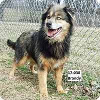 Adopt A Pet :: Brandy - Cannelton, IN