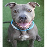 Adopt A Pet :: KING - Los Angeles, CA