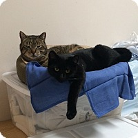 Adopt A Pet :: Slate and Blackie - Hollister, CA