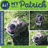 Adopt A Pet :: Patrick - New Port Richey, FL