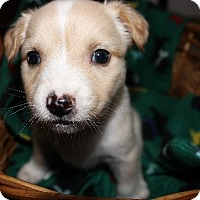 Adopt A Pet :: Keller - Alpharetta, GA