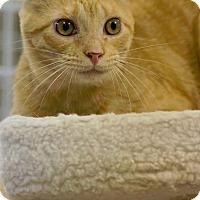 Adopt A Pet :: STONE - Houston, TX