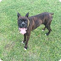 Adopt A Pet :: Garry - Austin, TX