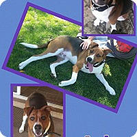 Adopt A Pet :: Indy - Scottsdale, AZ