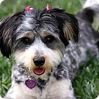 Adopt A Pet :: RAINEY - Mission Viejo, CA