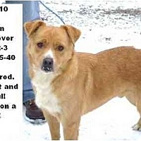 Adopt A Pet :: # 700-10  @ Animal Shelter - Zanesville, OH