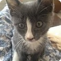 Adopt A Pet :: Bing - Brooklyn, NY