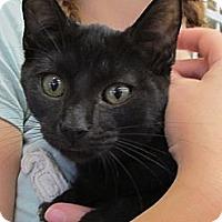 Adopt A Pet :: Flynn - Riverhead, NY