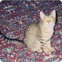 Adopt A Pet :: Stripes - Fayette, MO