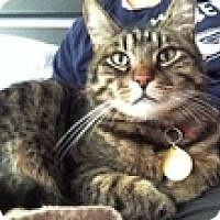 Adopt A Pet :: Malty - Vancouver, BC