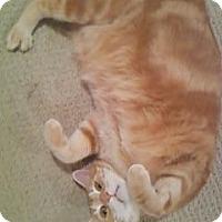 Adopt A Pet :: Choo Choo-Adoption Pending! - Colmar, PA
