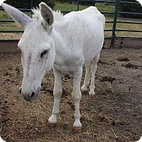 Adopt A Pet :: Blanco - Farmersville, TX