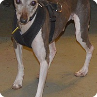 Adopt A Pet :: Vinnie - Prole, IA