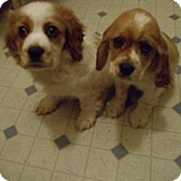 Adopt A Pet :: Sam & Samson 2 Must Adopt Both - Kannapolis, NC