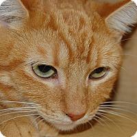Adopt A Pet :: Timmy - Whittier, CA