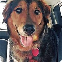 Adopt A Pet :: Jesse - Kansas City, MO