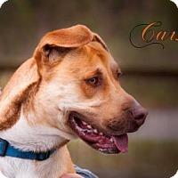 Adopt A Pet :: Carson - Middleburg, FL