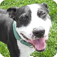 Adopt A Pet :: Oreo - Phoenix, AZ