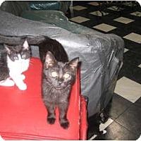 Adopt A Pet :: Wendy - Jeffersonville, IN