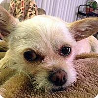 Adopt A Pet :: Stella - Toronto, ON