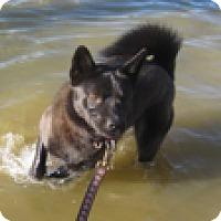 Adopt A Pet :: Razzle - Madison, WI