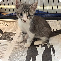 Adopt A Pet :: Stitch - San Ramon, CA