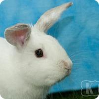 Adopt A Pet :: Curlie - Pflugerville, TX