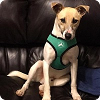 Adopt A Pet :: Vinnie - Portland, IN