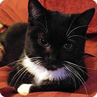 Adopt A Pet :: Roman - Garner, NC