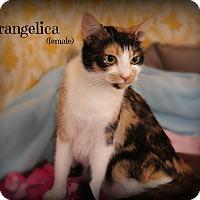 Adopt A Pet :: Frangelica - Glen Mills, PA
