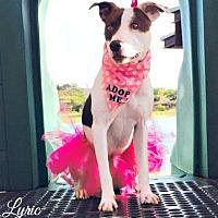 Adopt A Pet :: Lyric - Peoria, AZ