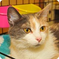Adopt A Pet :: Patches - Garland, TX