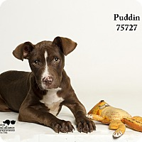 Adopt A Pet :: Puddin - Baton Rouge, LA