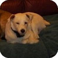 Adopt A Pet :: RHUBARB - Scottsdale, AZ