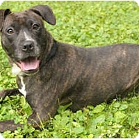 Adopt A Pet :: Tallulah - Chicago, IL