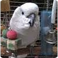 Adopt A Pet :: BAILEY - Mantua, OH