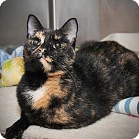 Adopt A Pet :: Belinda - East Norriton, PA