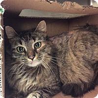 Adopt A Pet :: Paris - Monroe, GA