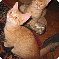 Adopt A Pet :: Carolina - Colmar, PA