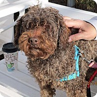 Adopt A Pet :: Charlie - Freeport, NY