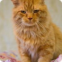 Adopt A Pet :: Poseidon - Grayslake, IL