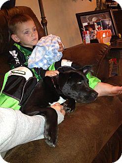 Labrador Retriever/Terrier (Unknown Type, Medium) Mix Puppy for adoption in Youngstown, Ohio - Dahlia ~ Adoption Pending