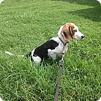 Adopt A Pet :: Blakely - Stilwell, OK