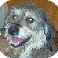 Adopt A Pet :: Lilly - Hamilton, ON
